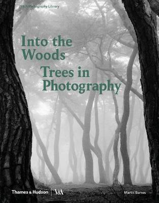 Into the Woods: TreesinPhotography