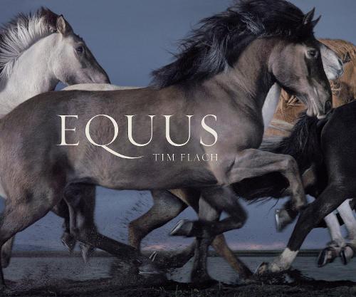 Equus(Mini)