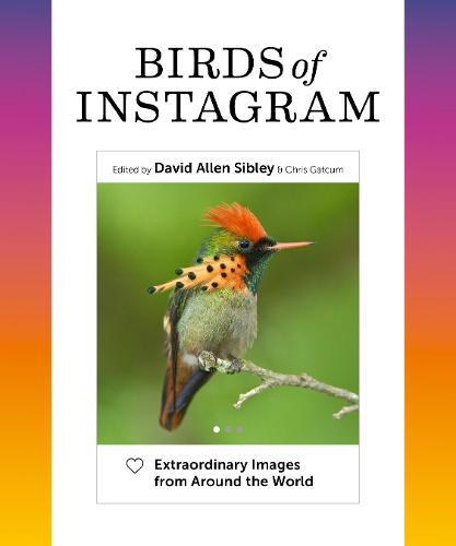 Birds of Instagram: Extraordinary Images from Around the World