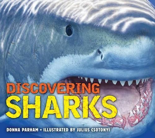 DiscoveringSharks