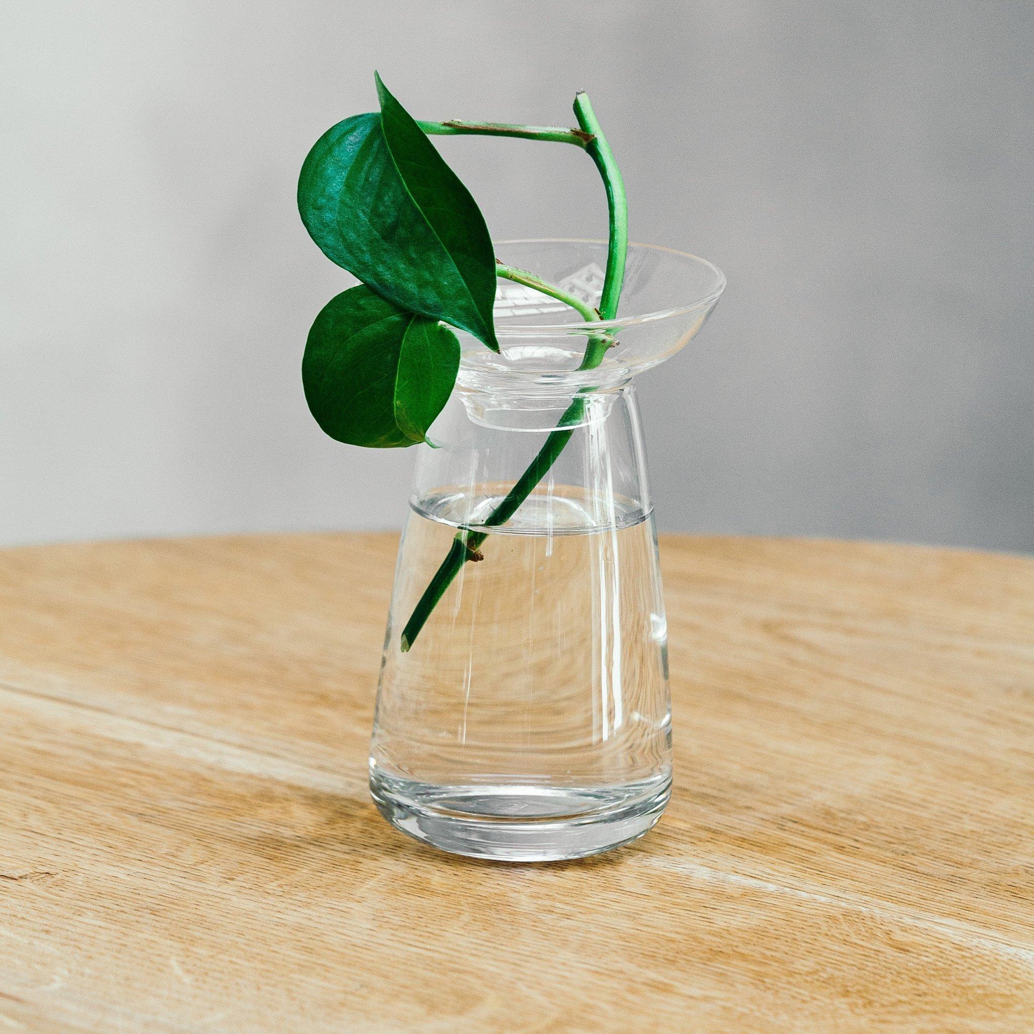 Kinto Aqua Culture Vase(Small,clear)