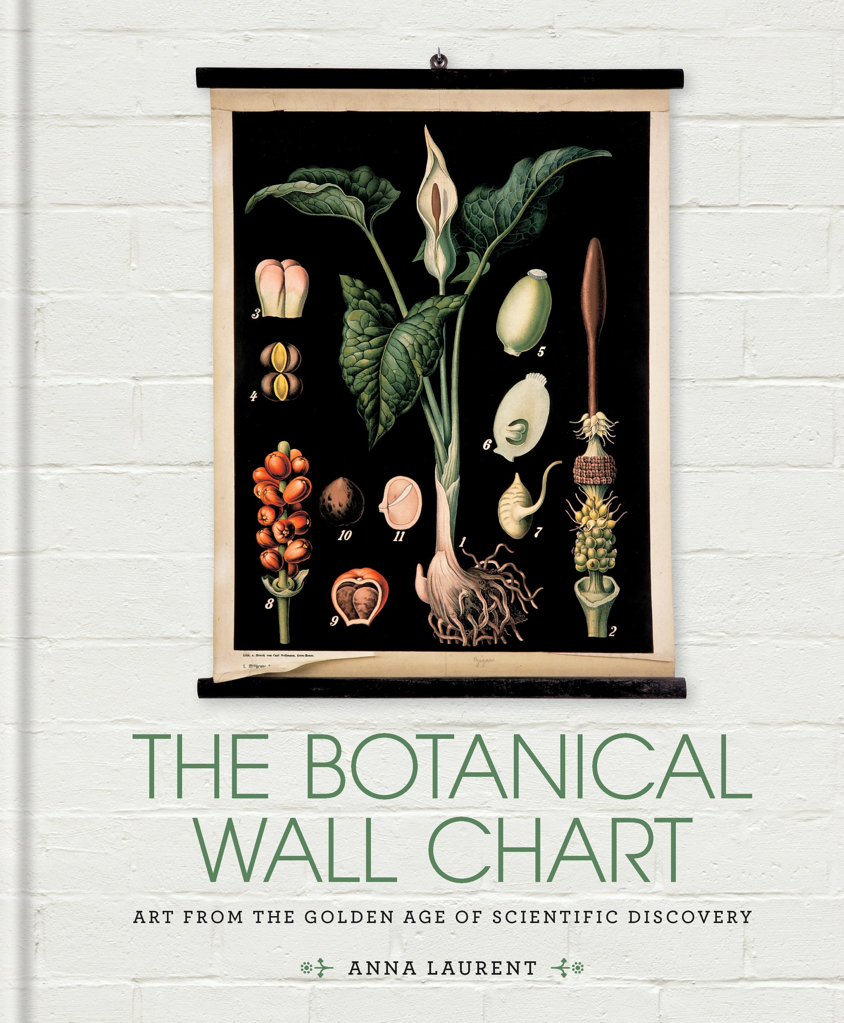 The Botanical Wall Chart: Art from the golden age of scientific discovery